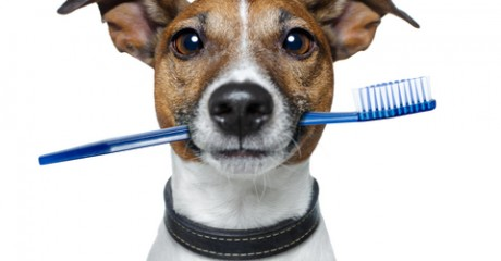 What Can Be Used To Brush Dogs Teeth