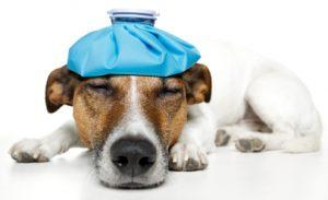 Canine Influenza Virus Outbreak