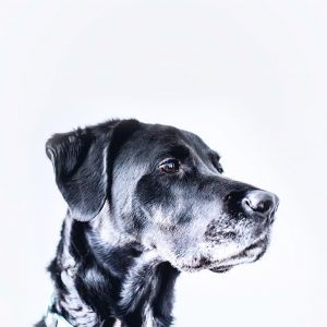 Senior Pet Check-Ups